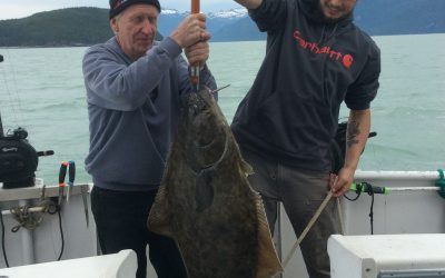 latest halibut catch in Haines Alaska